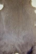 Skins on stock 11 pieces Kanin Mausgrau